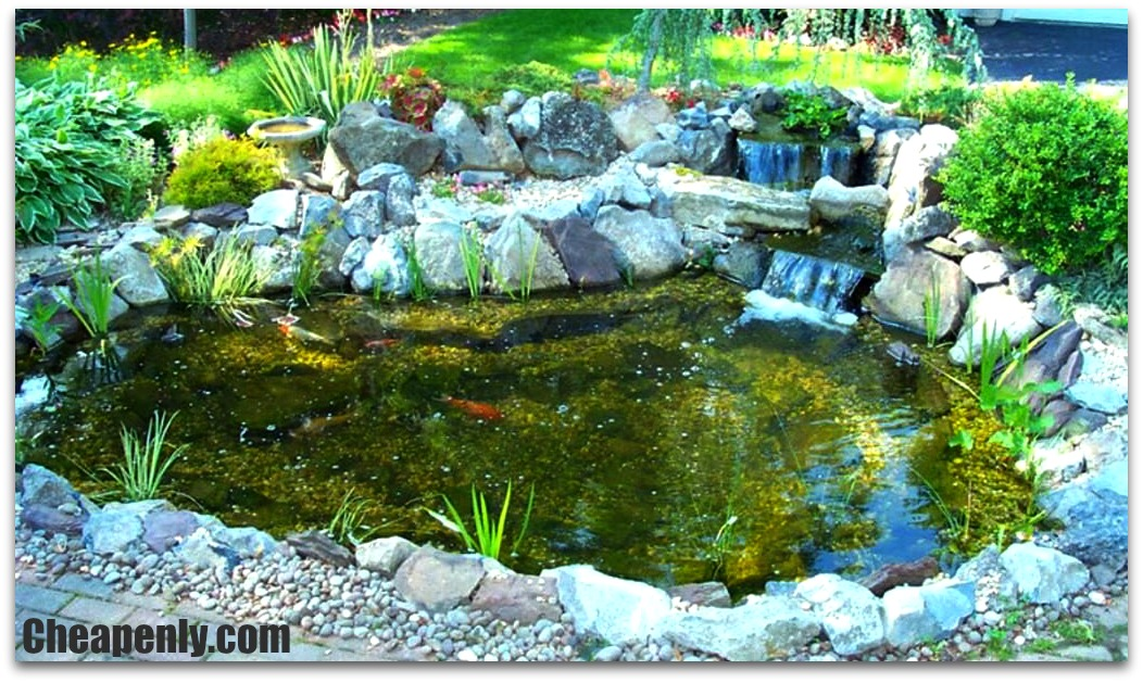 Large Koi Ponds For Sale In Houston Texas